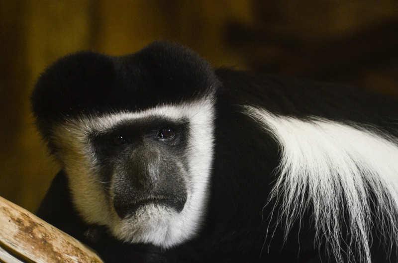 Belfast-Zoo-vacaciones-en-belfast