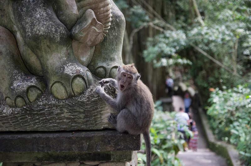 Bosque-de-los-monos-que-ver-en-ubud