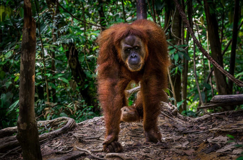 Bukit Lawang - que ver en sumatra