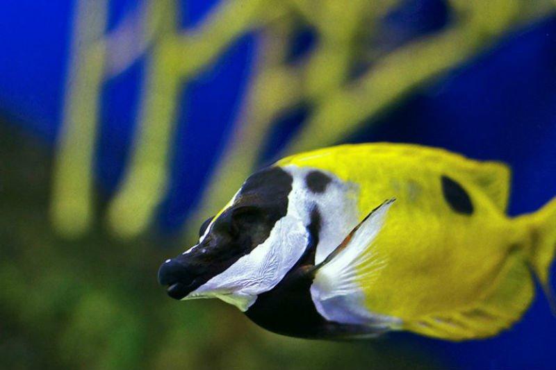 Visita el Aquarium of the Americas