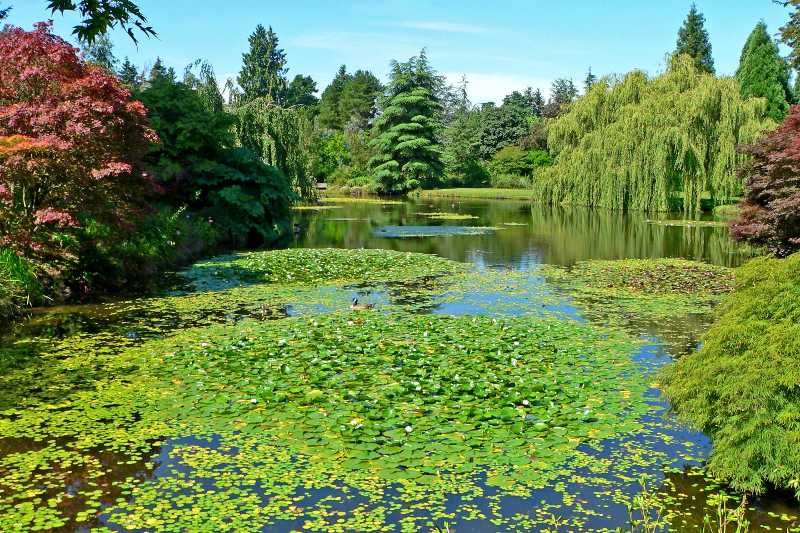 VanDusen_Botanical_Garden